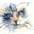 treuer Katzenblick