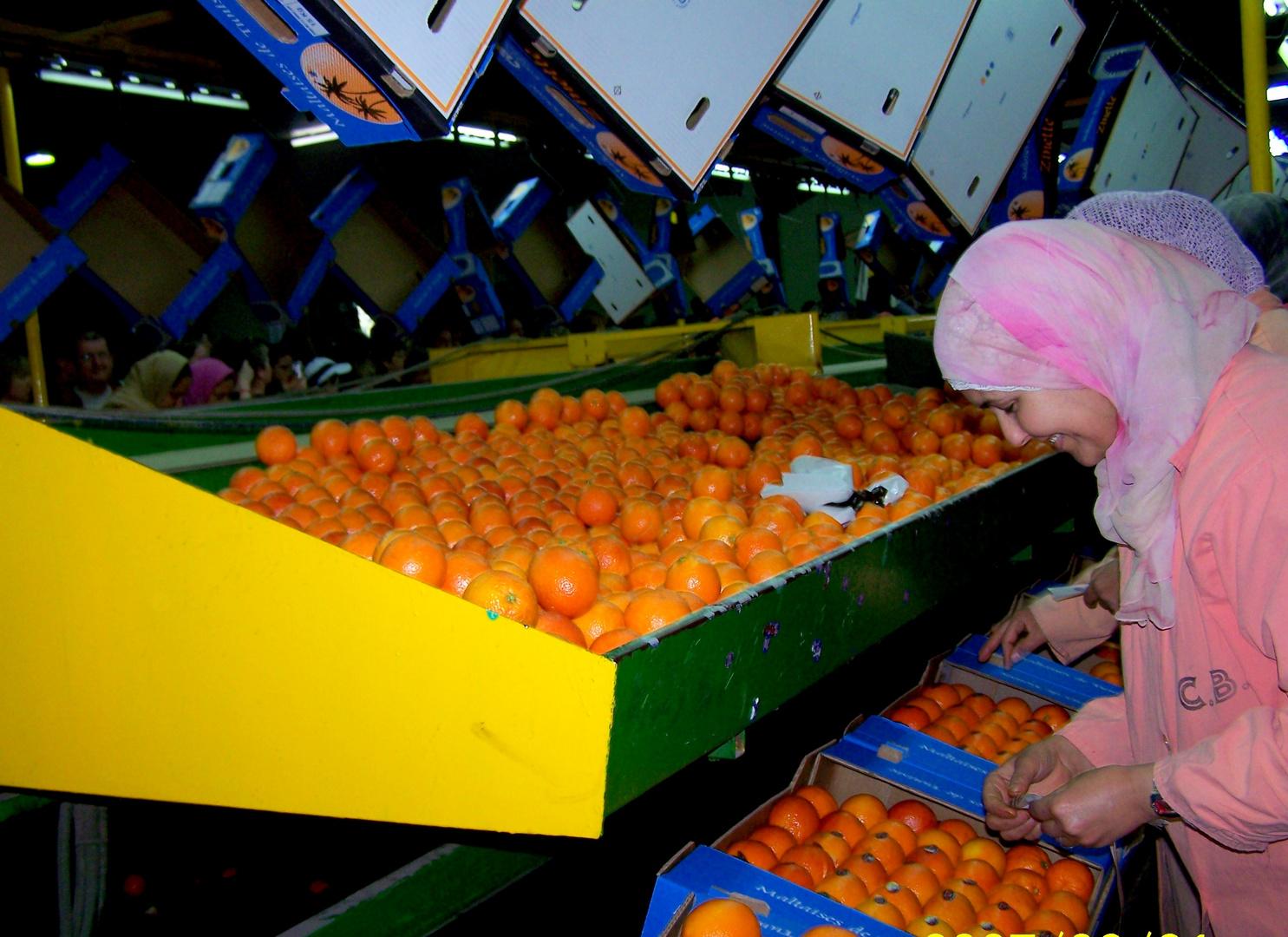 Tri des oranges .....