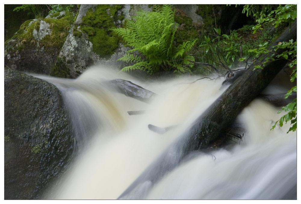 Triberger Wasserfall #4