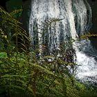 Triberger Wasserfall mit Waldfarn