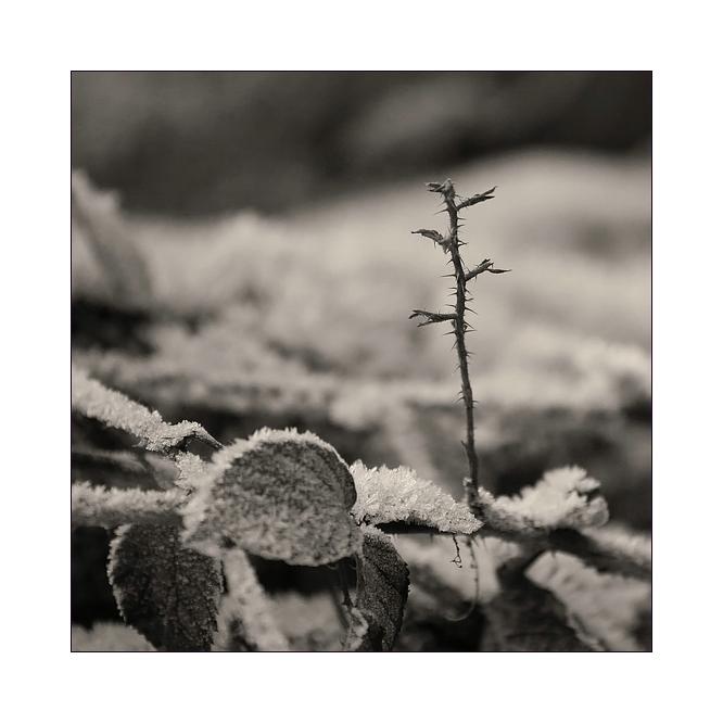 Triebe im Winter...