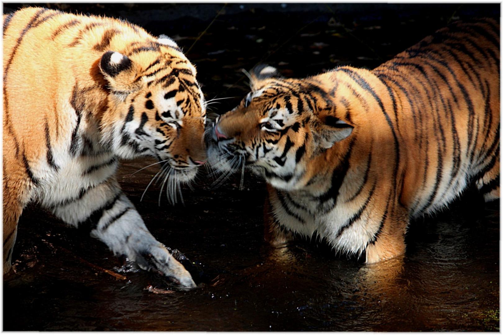 Trilogie 3 Vertragen Wir Uns Wieder Foto Bild Tiere Zoo