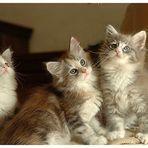 ....Trio.....