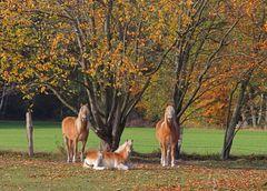 Trio im Herbst