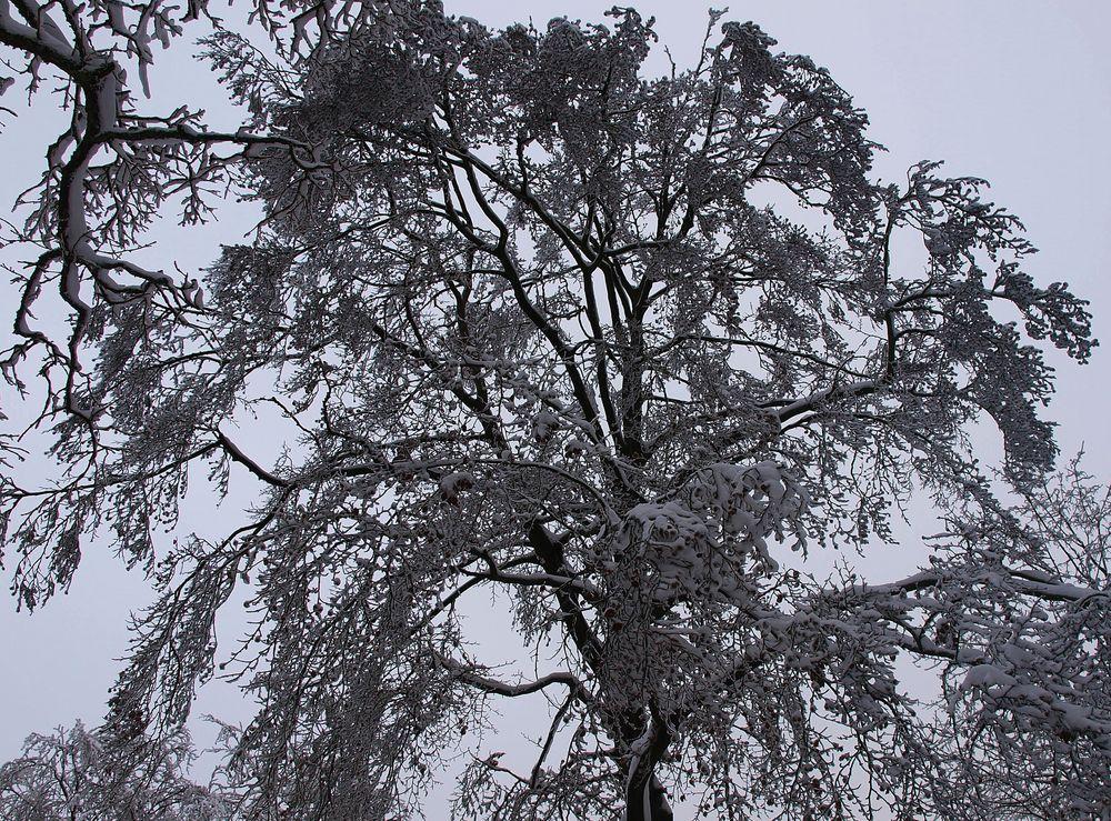 Trister Winter