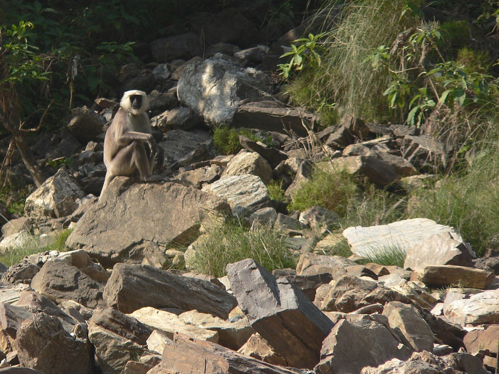 Trisuli River Nepal Monkey Rapid
