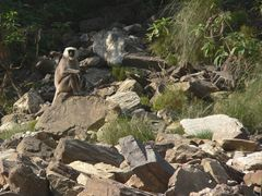Trisuli River Nepal Monkey Rapid