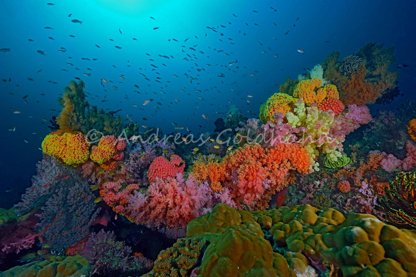 Triton Bay 1