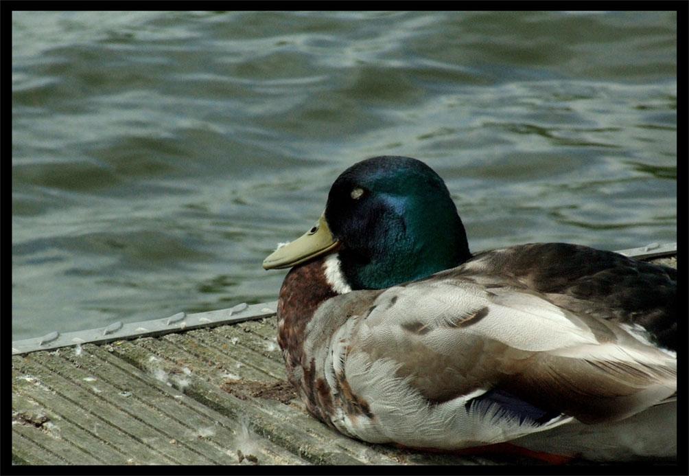 ...Trocken-Dock...