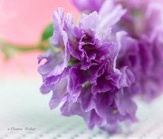Trockenblume mit lebendigem Flair