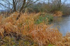 trockenes Gras am See (hierba seca)