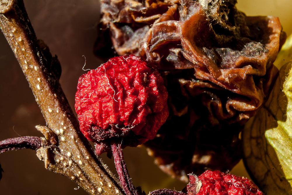 Trockenfrüchte des Herbstes