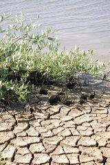 Trockenheit auf Bonaire Karibik