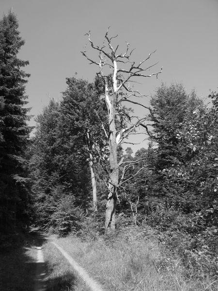 Trockenzeit in Nordhessen