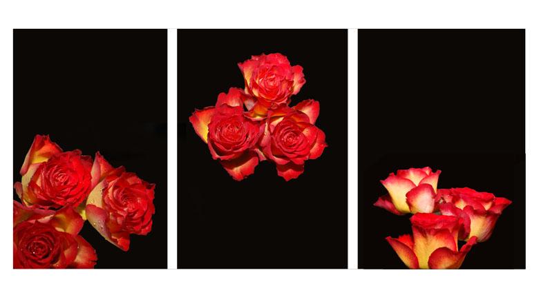 ~ trois fleurs ~