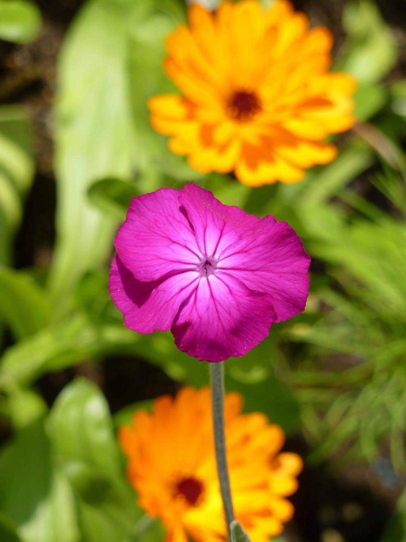 Trois petites fleurs