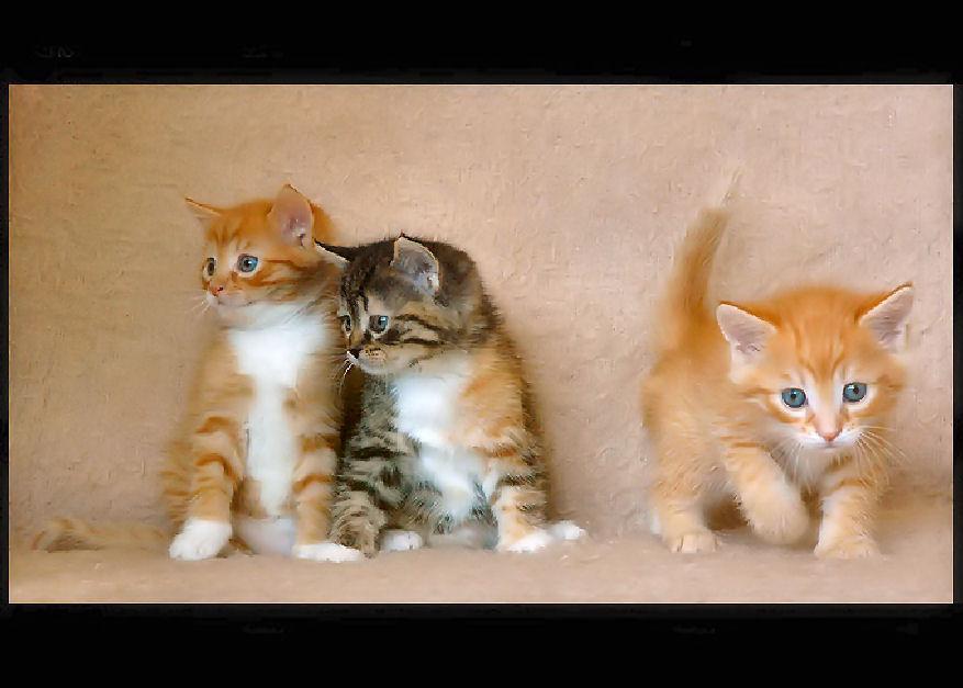 Trois petits frères
