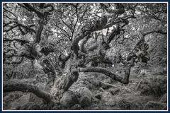 Troll und Feen-Wald