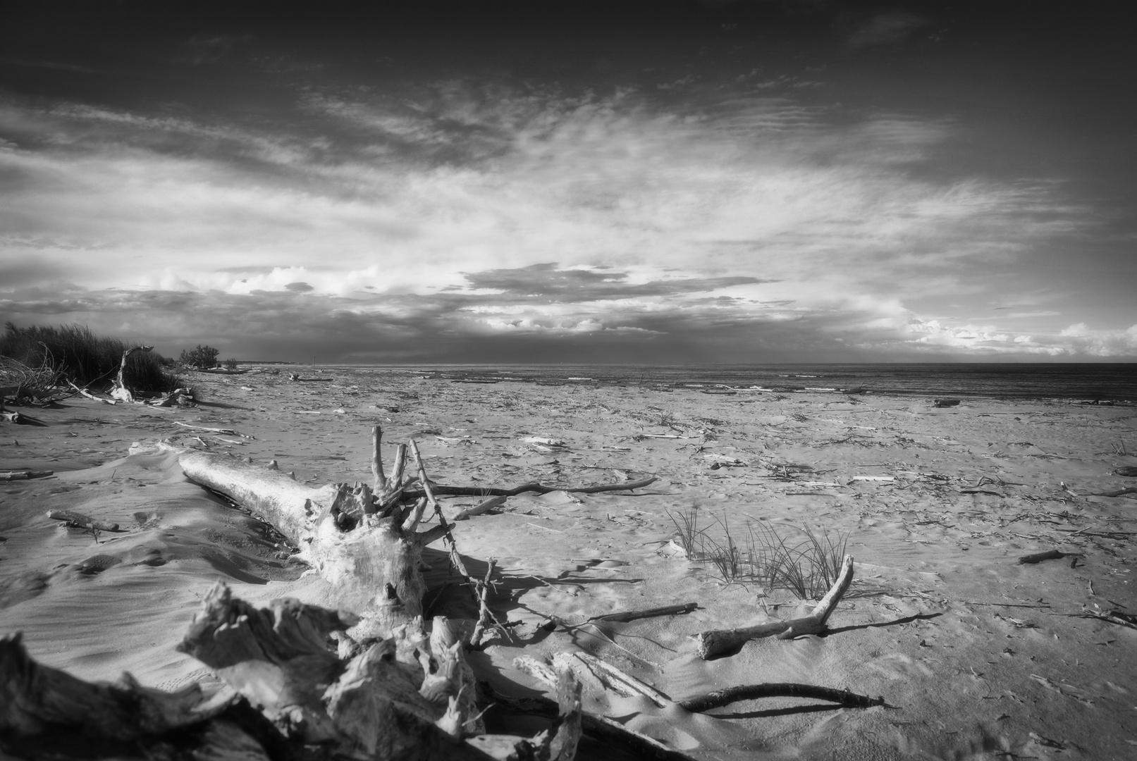 tronco sulla spiaggia