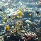 Tropen - Aquarium