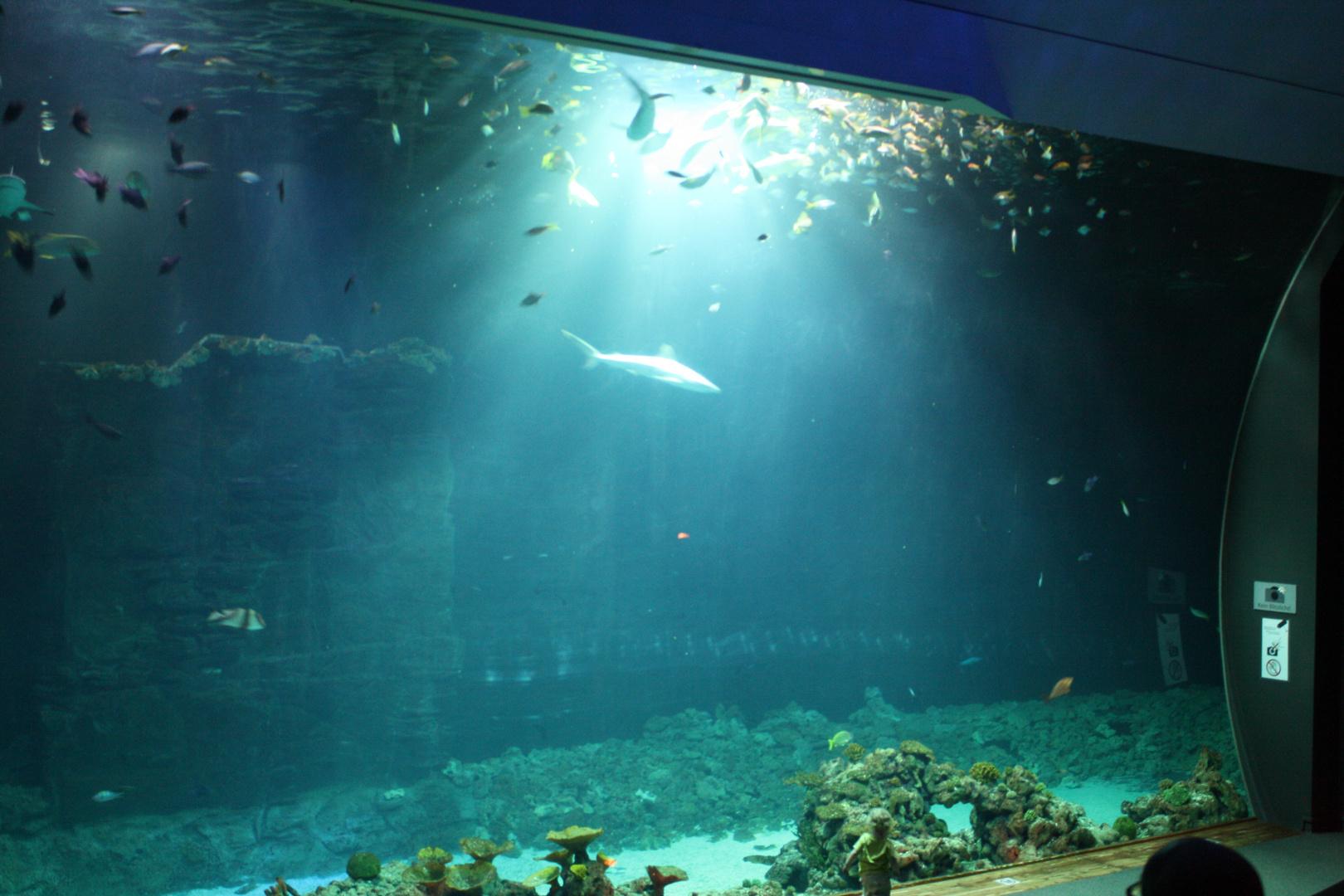 Tropen-Aquarium Hagenbeck 11./2013 1