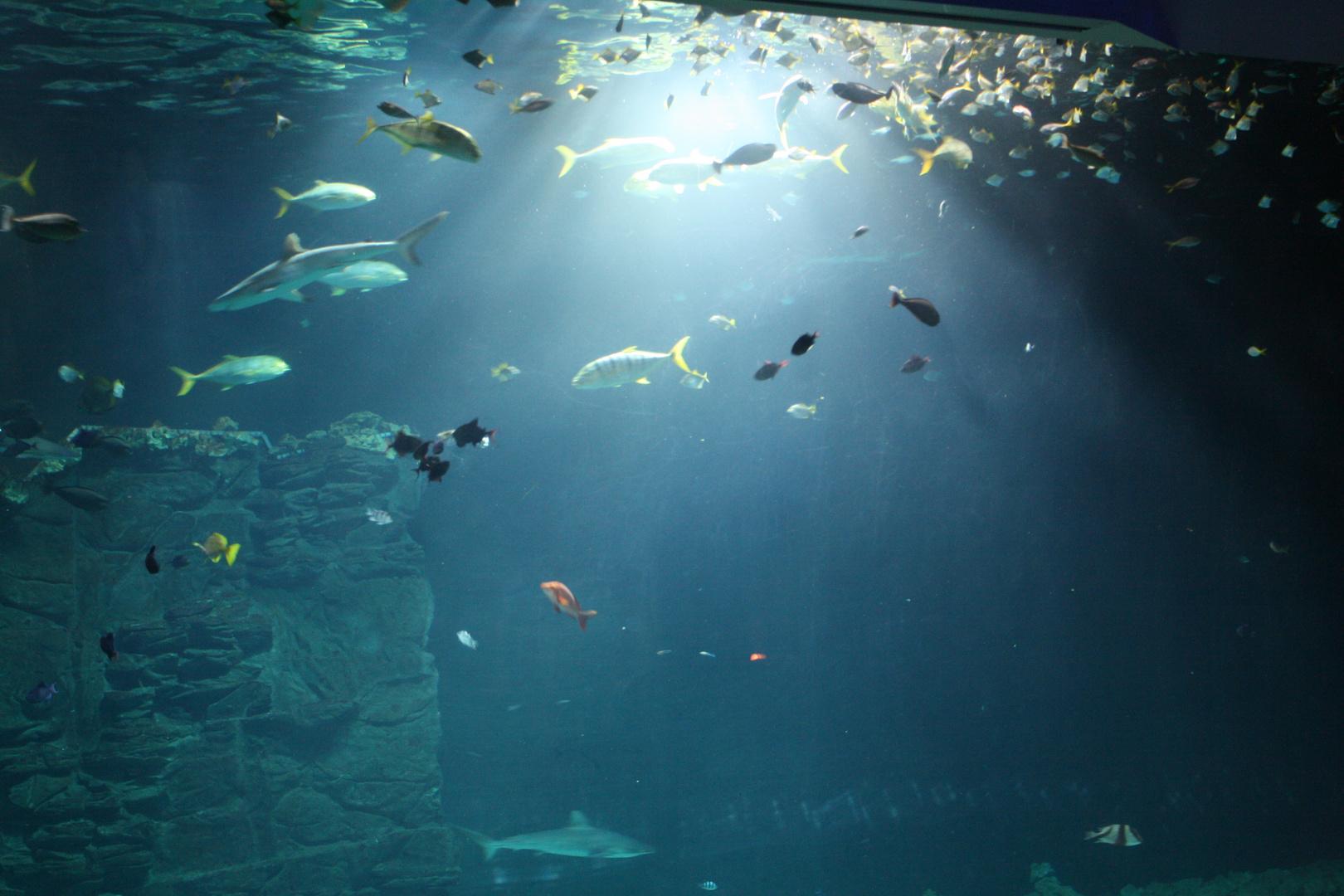 Tropen-Aquarium Hagenbeck 11./2013 2