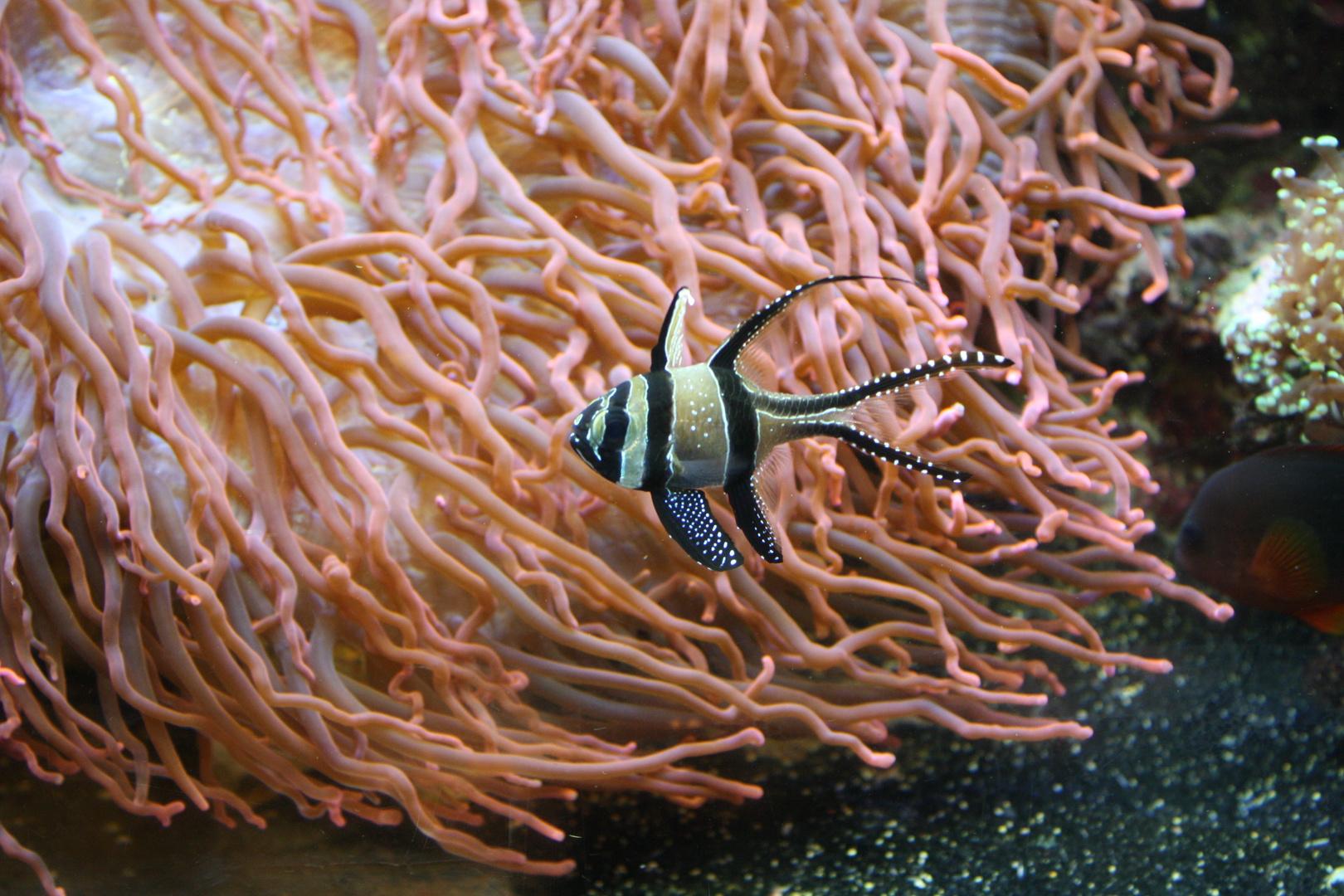 Tropen-Aquarium Hagenbeck 11./2013 8