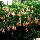Tropetas. Flores