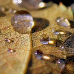 Tropfen auf einem Herbstblatt 2