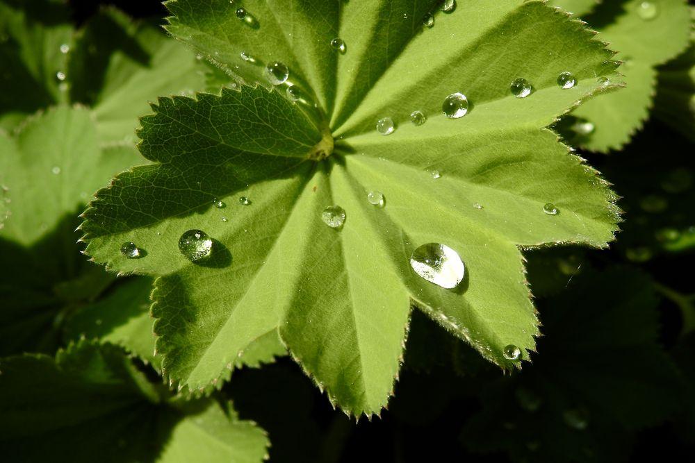 Tropfen nach dem Regen..