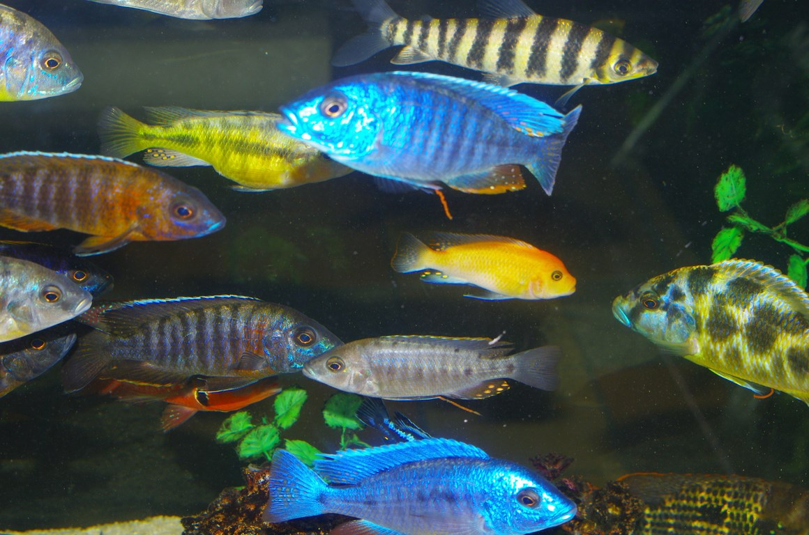 Tropical fish of Colombia