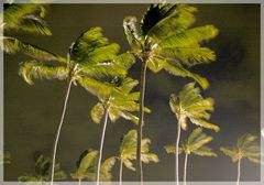 Tropical Night Winds