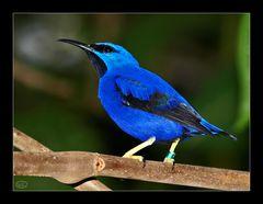Tropisch Blau