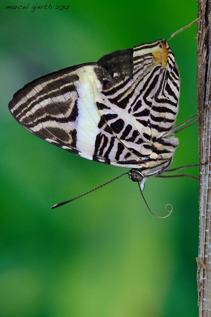 Tropische Schmetterlinge Botanischer Garten München Foto