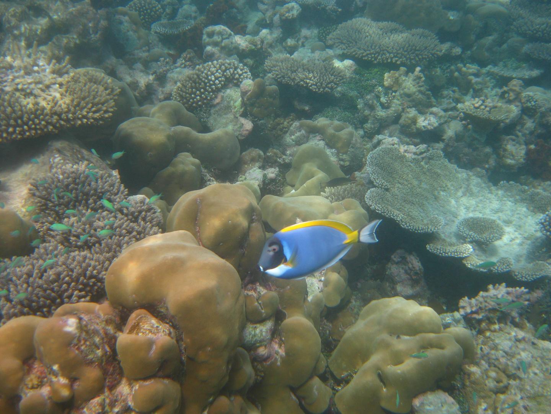 Tropischer Fisch