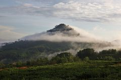 Tropischer Nebelwald