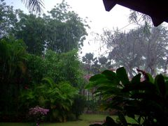 Tropischer Regen