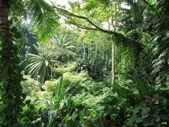 Tropischer Regenwald im Sonnenschein