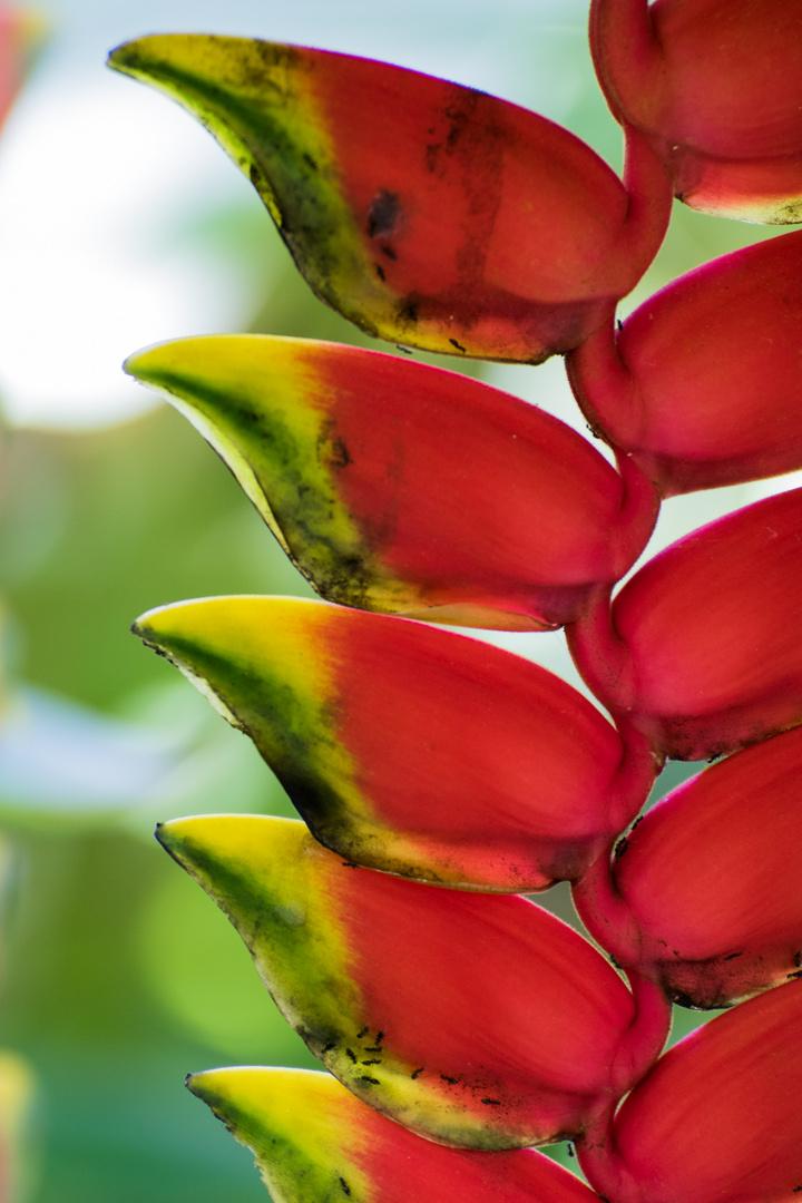 Tropisches Arrangement