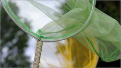 ... trotz Schmetterlingsnetz ...