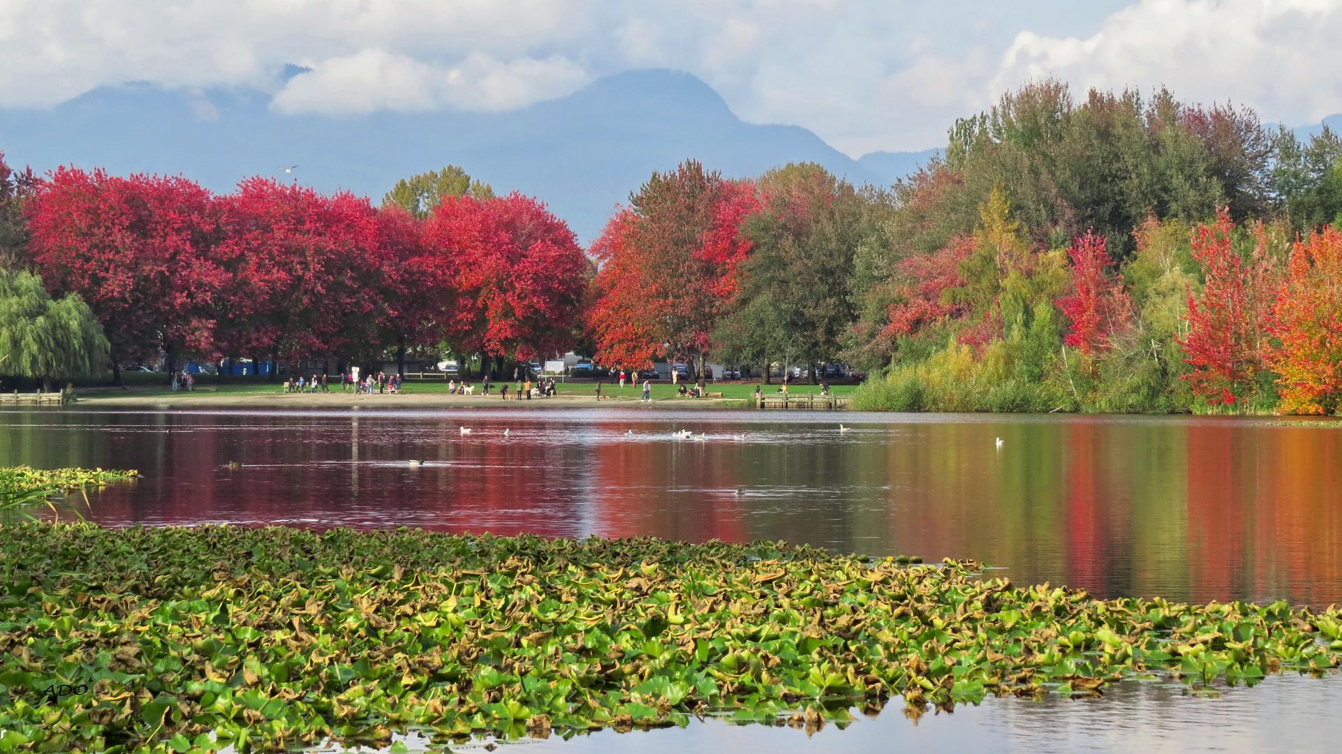 Trout Lake (2)
