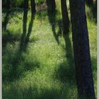 Trows plantation Cheviot Hills 5