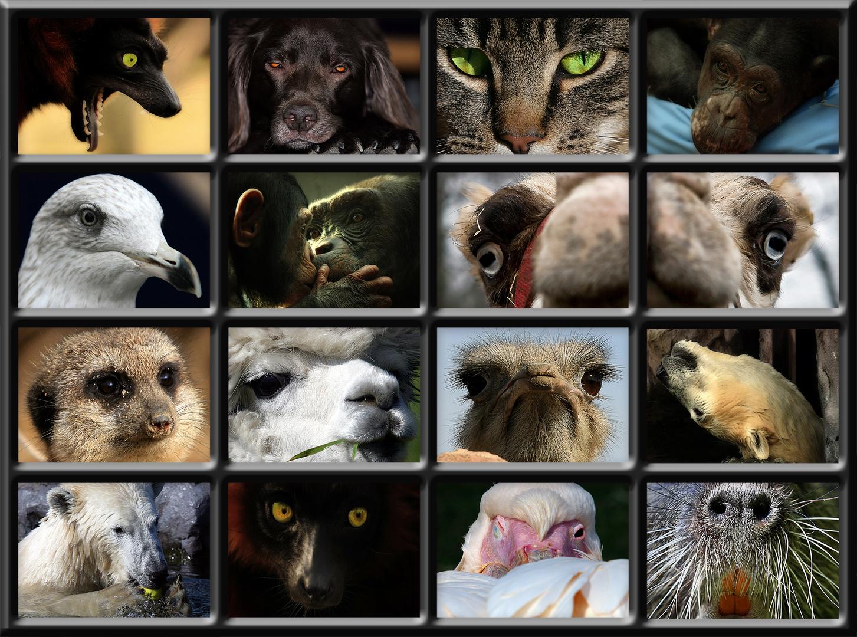 true faces