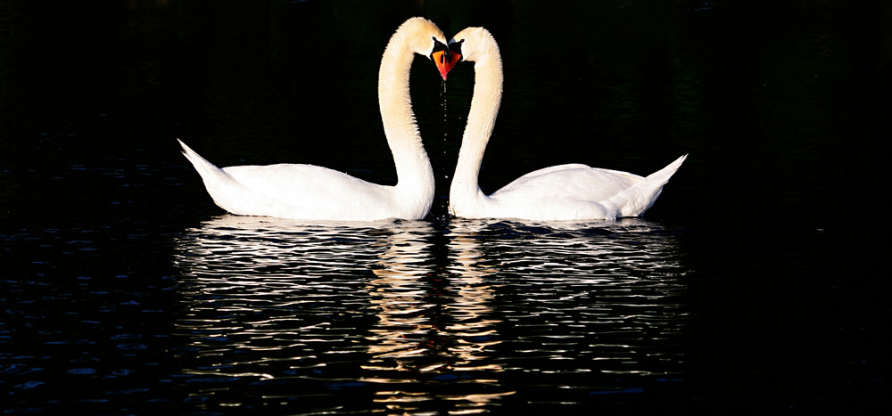 ! true love !