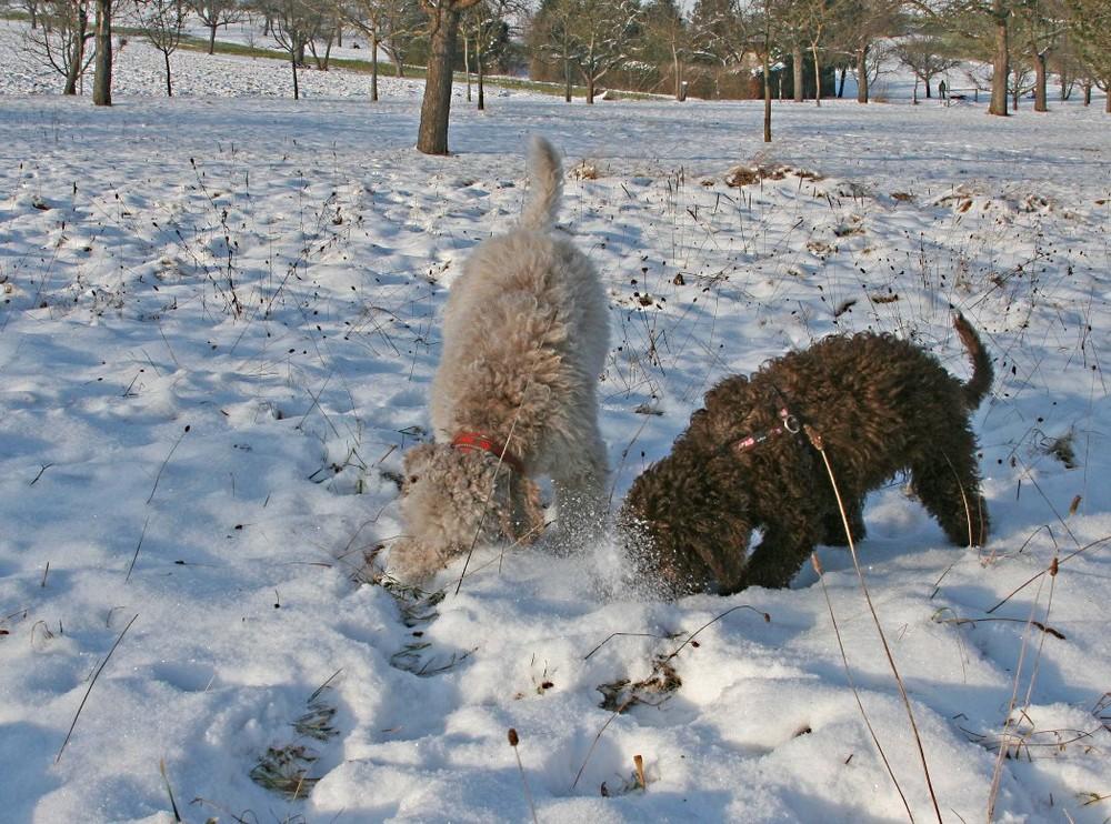 Trüffelhunde