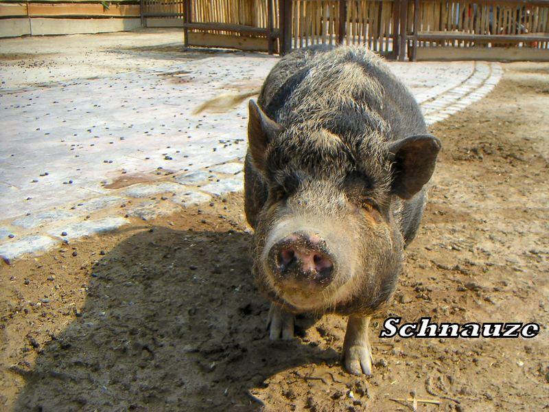 Trueffelschwein