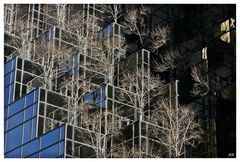 Trump Tower NY Spiegelungen