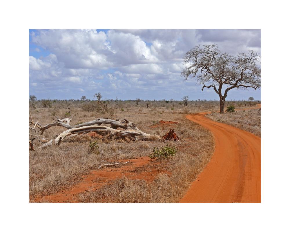 Tsavo East Landscape