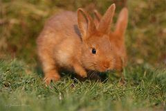 tschö bis nächste Ostern :-)