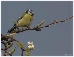 Natur Vögel